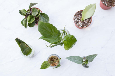 Create New Plants: How to Propagate Plants with Corina