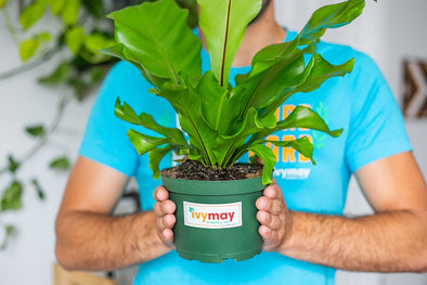 Indoor Plants in Nursery Pots: Your Plant's BFF