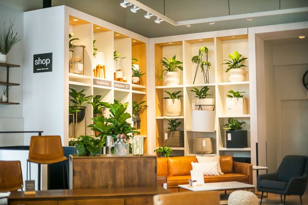 IvyMay Interior Plantscaping