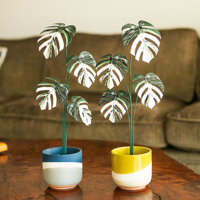 "Hippie Houseplants ""Paper Plant - Albo Monstera"""