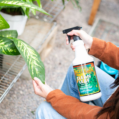 Jungle Rain Clean Leaf Spray