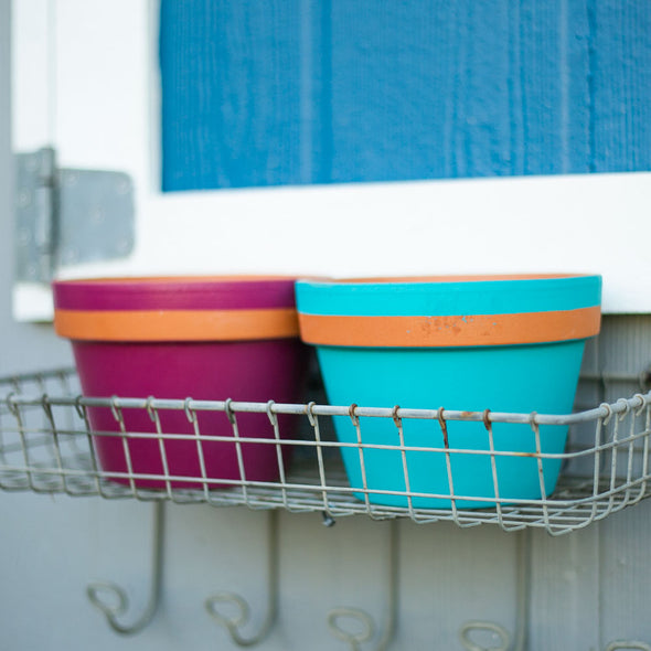 "One Stripe - 6"" Vibrant Pots"