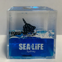 Load image into Gallery viewer, SEA LIFE Sydney Cube with Stingrays in Blue Liquid