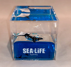 SEA LIFE Sydney Cube with Stingrays in Blue Liquid
