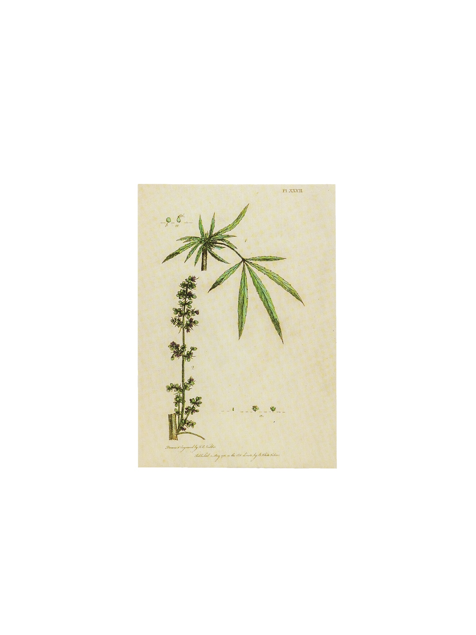 Botanical Hemp Postcards