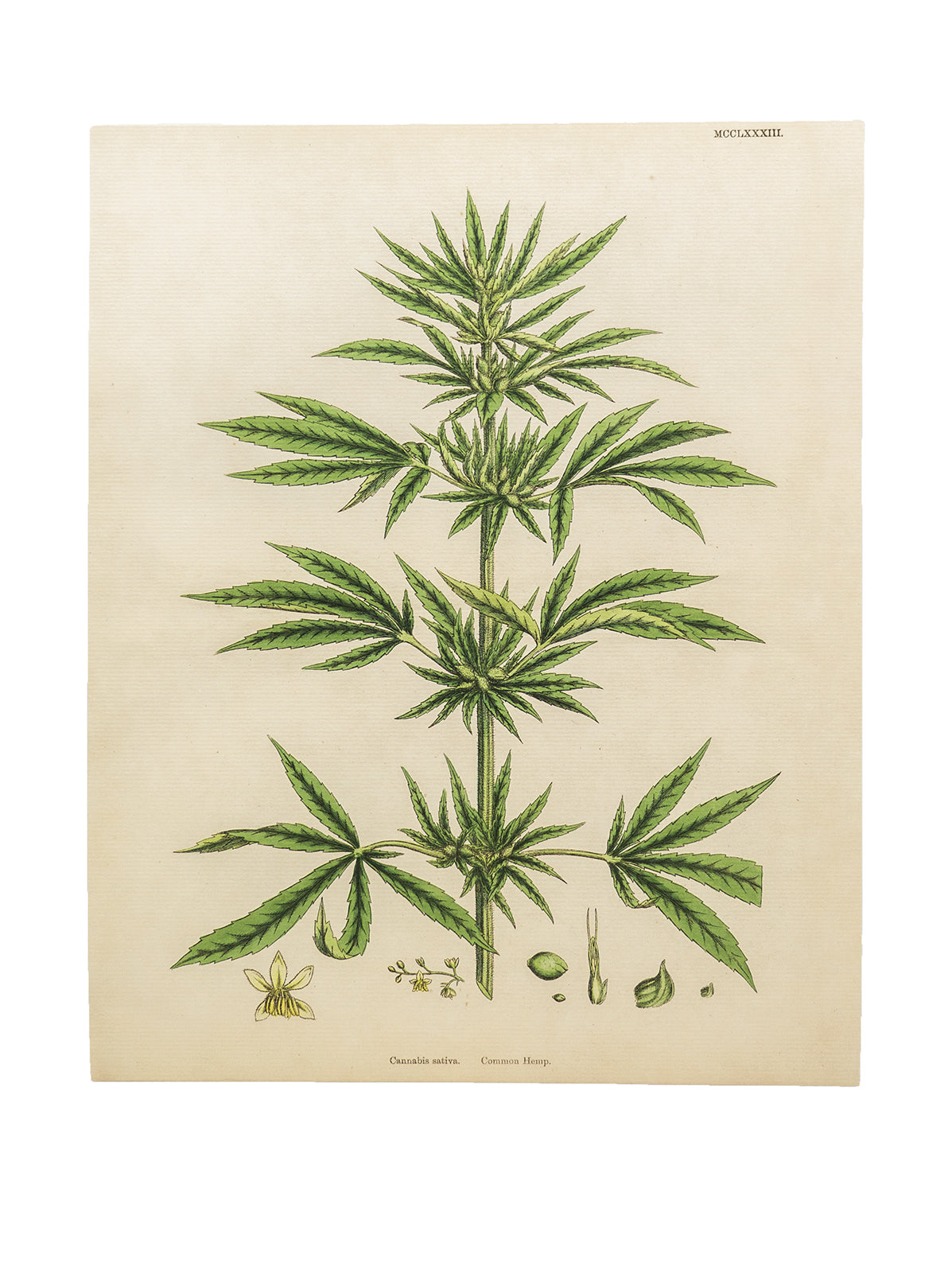 Botanical Hemp Prints | M