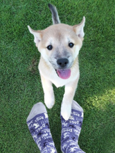 Load image into Gallery viewer, Dogs! Crew Socks