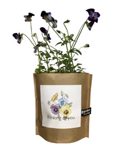 Load image into Gallery viewer, Thinking of You Pansies Garden in A Bag