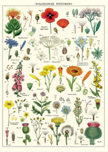 Load image into Gallery viewer, Cavallini Posters Wildflowers