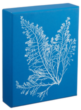 Load image into Gallery viewer, Sunprint: Cyanotypes Notecards
