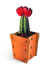 Load image into Gallery viewer, Pop Plants Pencil Holder Cacti
