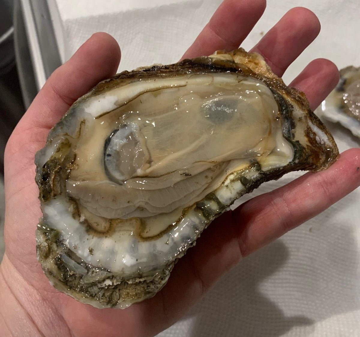 Oysters - 30ct. box