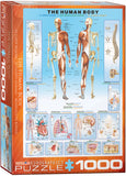 The Human Body 1000 Piece Puzzle by Eurographics
