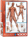 The Muscular System 1000 Piece Puzzle by Eurographics