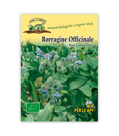 Borragine - Italian Sprout