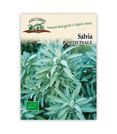 Salvia Officinale - Italian Sprout