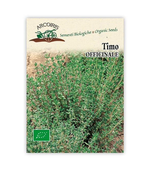 Timo Officinale - Italian Sprout