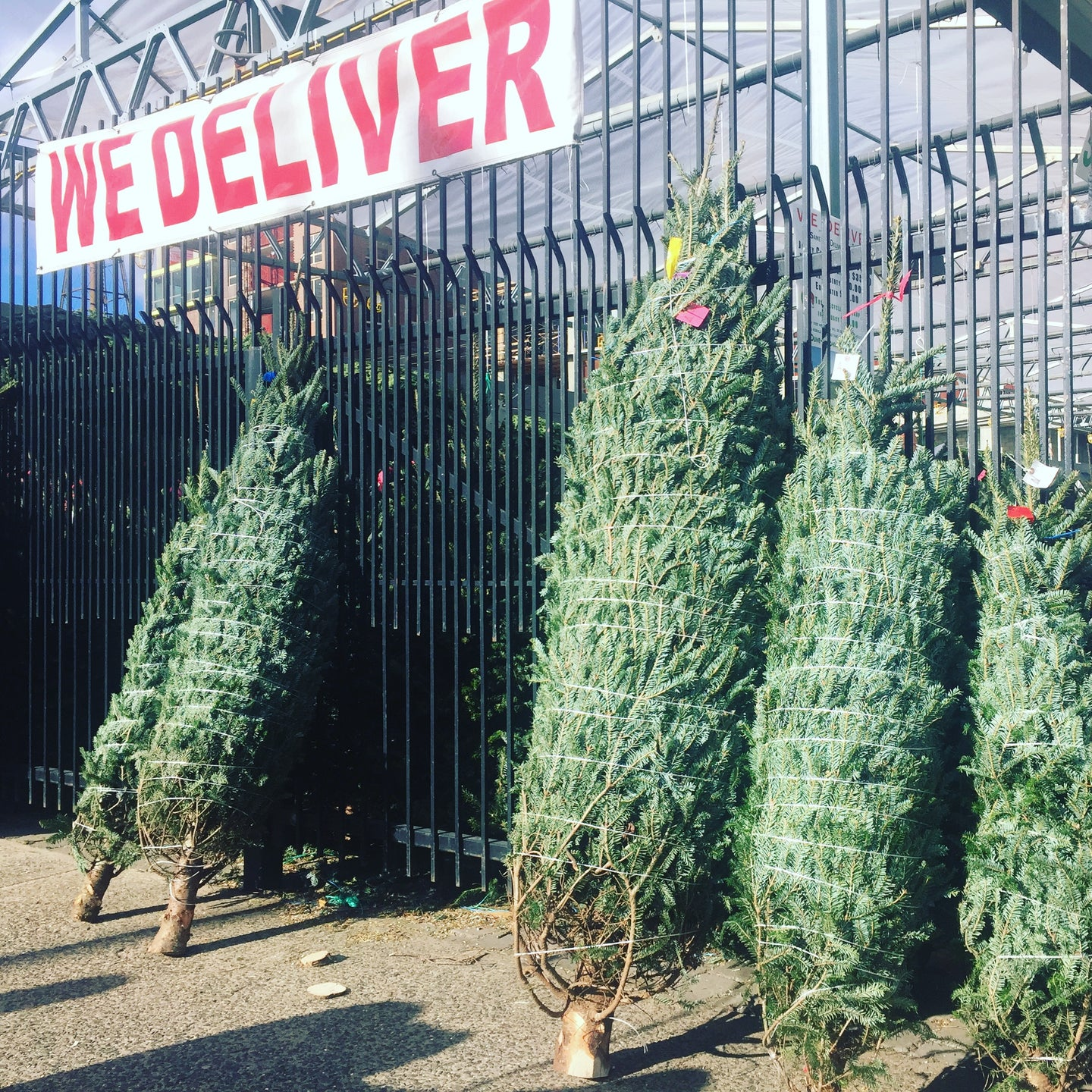 Delivery of Fresh Christmas trees