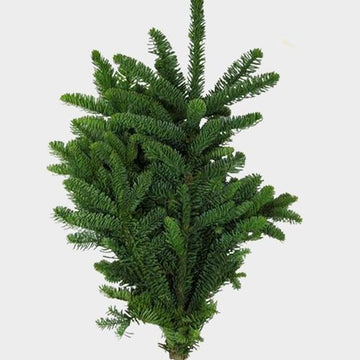 NOBLE FIR BUNCH