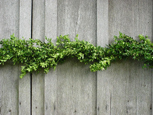 25 Ft Boxwood Garland - 14th Street Garden Center