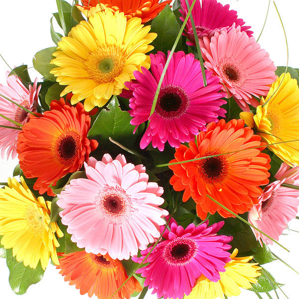GERBERA BOUQUET - 14th Street Garden Center