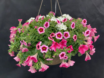 HANGING BASKET 11 INCH COMBO #13