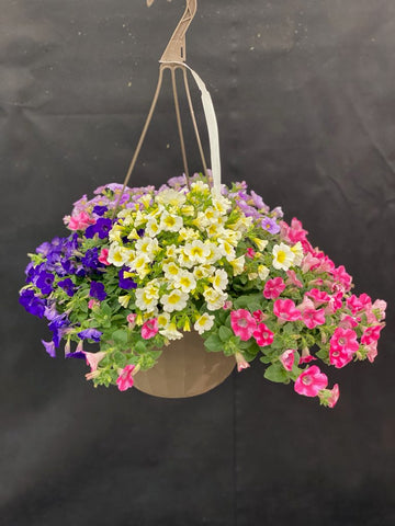HANGING BASKET 11 INCH COMBO #4