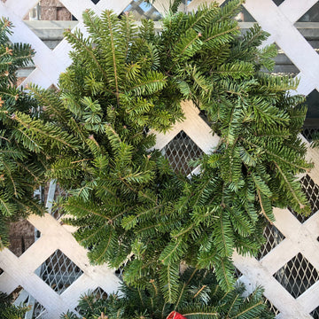PLAIN FRASER FIR WREATHS 8 INCH TO 48 INCH