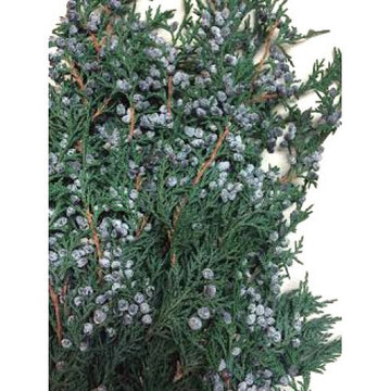 JUNIPER BUNCH