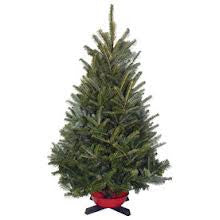 Fraser Fir Christmas 2FT- 3FT Tree Table Top with Stand - 14th Street Garden Center - 2