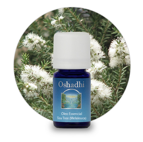 Tea Tree (Melaleuca) – Óleo Essencial – 5ml