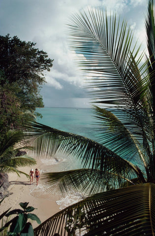 A photograph captured in 1976 of a couple walking along the beach in the distance and a large palm in the foreground of the image