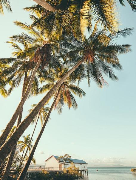 A photograph looking up at tall tropical palm trees.