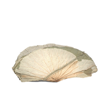 Load image into Gallery viewer, LOTUS LEAVES 蓮葉, 10lbx3