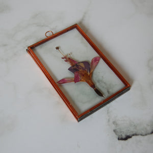 Copper Framed Fuchsia #1