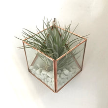 Load image into Gallery viewer, Square Wall Mounted Planter