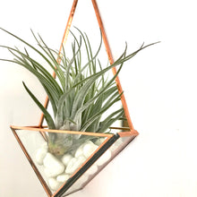 Load image into Gallery viewer, Mini Wall Mounted Planter