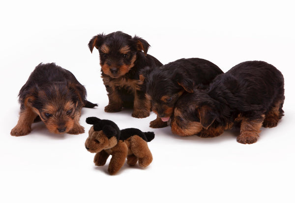 Tips In Naming Your Puppies | Abby's Alley