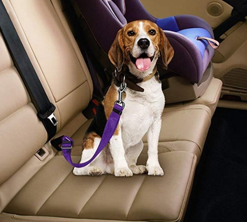 Adjustable Dog Seat Belt Dog Pet Car - Abby's Alley