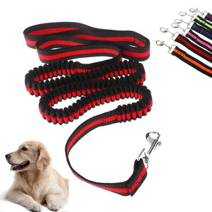 Dog Walking Elastic Bungee Leash Hand Free - Abby's Alley