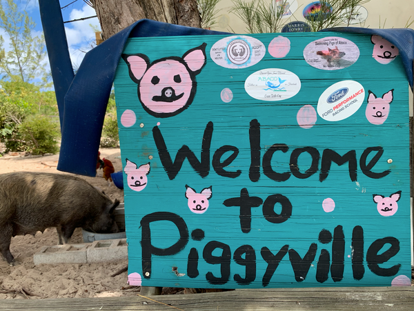 Piggyville on No Name Cay in Abacos