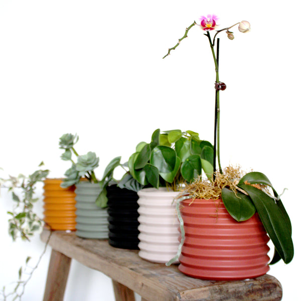 Because your plant babies deserve the best why not pop them in one of these cool Berlin cover pots. Mix and match with our others planters and pots. Size: 11.5 x 11.5 x 11.5cm Cover pot only - no drainage hole.
