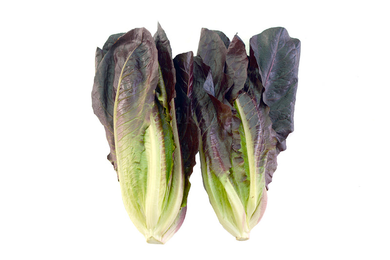 Romaine Red Lettuce