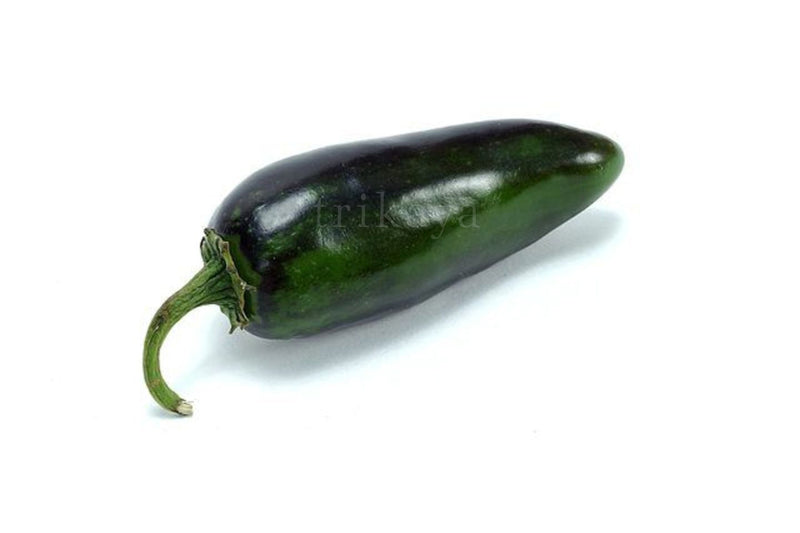 Jalapeno hot chilly