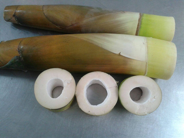 Bamboo Shoot Fresh