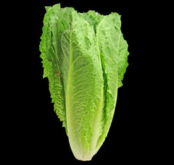 Lettuce Romaine - Green