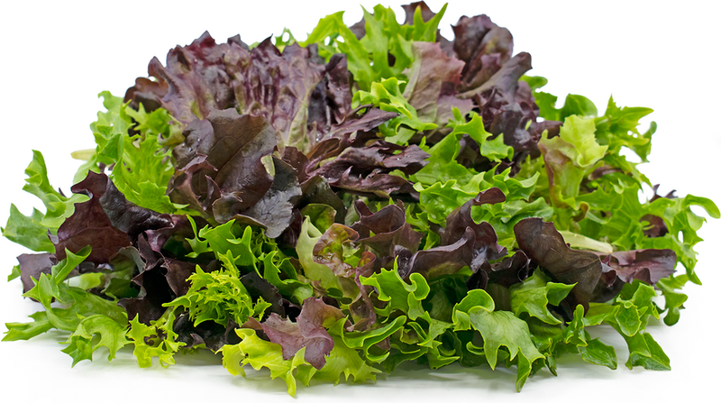 Lettuces Mix