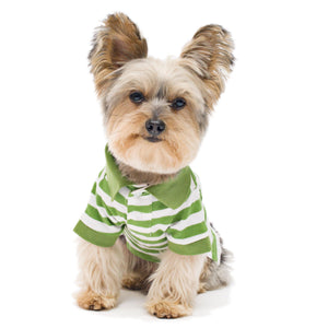 Green Stripe Dog Polo Shirt