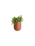 Oval Plant Pot Clay Brown
