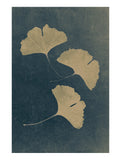 Ginkgo N.1 Poster